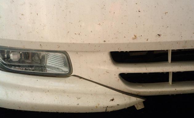 image 1463806583 bug Top 10 tác nhân gây hỏng lớp sơn xe ít người biết